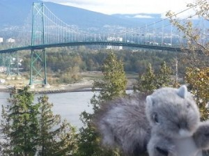 Squirrel getting ready to run across LionsGate Bridge