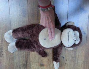 Monkey blog