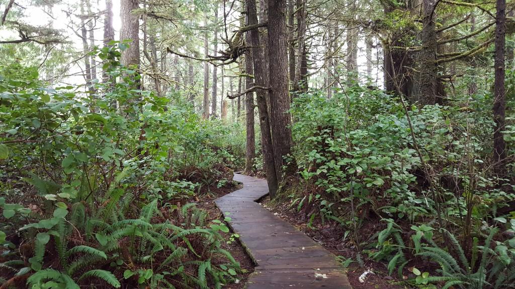 forest blog